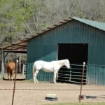 Horses at the Barn